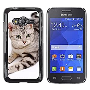 TopCaseStore / la caja del caucho duro de la cubierta de protección de la piel - American Bobtail House Cat Stripes - Samsung Galaxy Ace 4 G313 SM-G313F