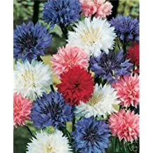 Bachelor Button- Mix- 200 Seeds - 50 % off sale