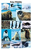 Laminated Polar Wildlife Montage Poster