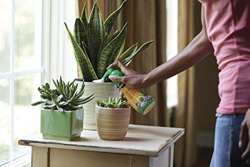 Amazon.com : Miracle Gro Liquid Succulent Plant Food, 8 Ounce : Garden U0026  Outdoor