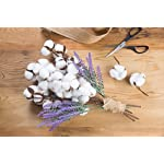 Juvale-Cotton-Stems-4-Pack-Cotton-Flowers-7-Balls-per-Stem-Farmhouse-Style-Display-Vase-Filler-Rustic-Decorations-Home-Office-16-inches