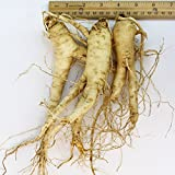 WOHO Cultivated Fresh Ginseng American Ginseng (Extra Jumbo) 8 Ounce (3-5 roots)