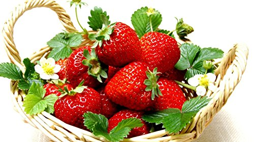 Everbearing Ozark Beauty Strawberry Plants 20 Bare Root Plants - TOP PRODUCER (Tree Strawberry)