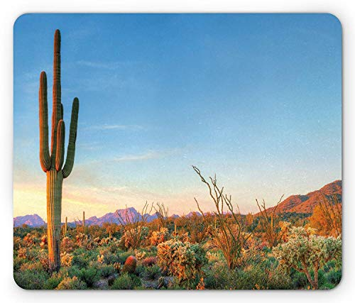 RS-pthrAC Saguaro Mouse Pad, Sun Goes Down in Desert Prickly Pear Cactus Southwest Texas National Park, Standard Size Rectangle Non-Slip Rubber Mousepad, Orange Blue Green (Best Pizza In Key West)
