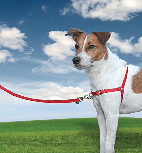 PetSafe Easy Walk EW-H-XS-RD-45 Harness Extra-Small Red
