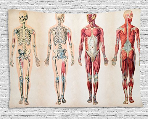 Ambesonne Human Anatomy Tapestry, Vintage Chart of Body Front Back Skeleton and Muscle System Bone Mass Graphic, Wide Wall Hanging for Bedroom Living Room Dorm, 80