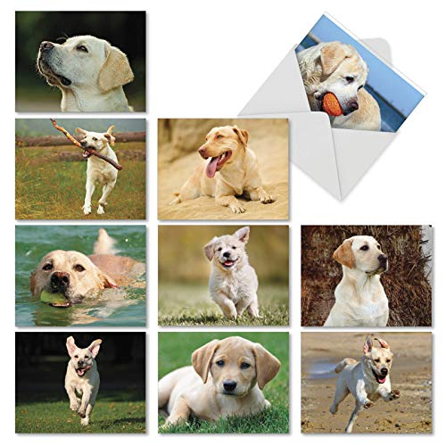 Lovable Labs - 10 Boxed All Occasion Note Cards with Envelopes 4 x 5.12 inch - Labrador Retriever Assorted Blank Greeting Cards - Yellow Lab Dog, Puppy, Animal Notecard Stationery AM6325OCB-B1x10