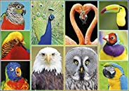 Buffalo Games - Amazing Nature Collection - Pretty Birds - 500 Piece Jigsaw Puzzle