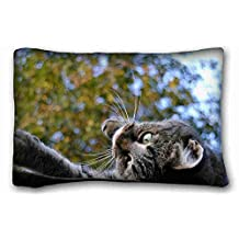 Custom ( Animals cat muzzles down roof trees playful ) Pillow Cushion Case Cover One Sides Printed 20x30 Inches suitable for Queen-bed PC-Bluish-32141