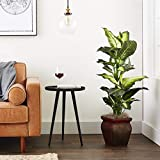 Nearly Natural 6ft. Ficus Artificial