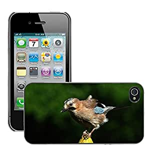 Etui Housse Coque de Protection Cover Rigide pour // M00134737 Jay Pájaro colorido Pluma Animal // Apple iPhone 4 4S 4G