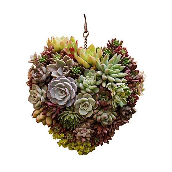 Danmu-Rustic-Iron-Wire-Wreath-Frame-Succulent-Pot-Iron-Hanging-Planter-Plant-Holder-Plants-are-Not-Included