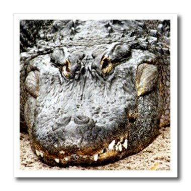 3drose-ht-616-1-crocodile-iron-on-heat-transfer-for-white-material-8-by-8-inch