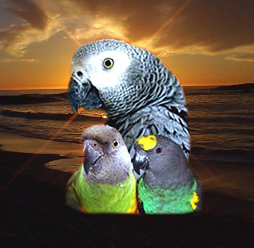 ABBA 1400 Bird Foods African Grey/ Senegal Food - Parrot Senegal