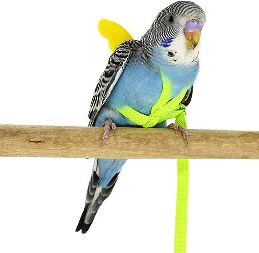 Ritapreaty Pet Parrot Bird Arnés y Correa Cuerdas voladoras Cuerda ...