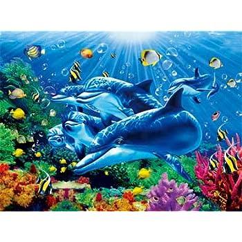 amazon com underwater dolphin coral reef