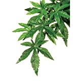 Exo Terra Silk Terrarium Plant, Large, Abutilon