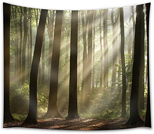 Sun Rays Peeking Through The Forest with Bushes