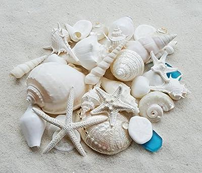 Tumbler Home White Seashells with Sea Glass - Home Decor Wedding Luxury Sea Shell Mix, Christmas or Crafts - 30+ Shells