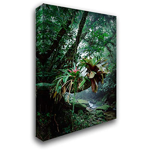 Bromeliads Growing in Trees Along Stream in Bocaina National Park, Atlantic Forest, Brazil 24x35 Gallery Wrapped Stretched Canvas Art by De Roy, Tui