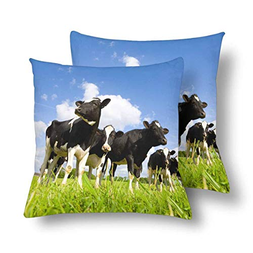 (Royalreal Holstein Cows in The Meadow Throw Pillow Cover Decorative Durable Cushion Cover Set of 2 18x18inch Soft Linen Pillowcase for Sofa Couch Bedroom)