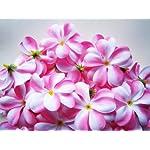 100-Pink-White-Hawaiian-Plumeria-Frangipani-Silk-Flower-Heads-3-Artificial-Flowers-Head-Fabric-Floral-Supplies-Wholesale-Lot-for-Wedding-Flowers-Accessories-Make-Bridal-Hair-Clips-Headbands-Dress