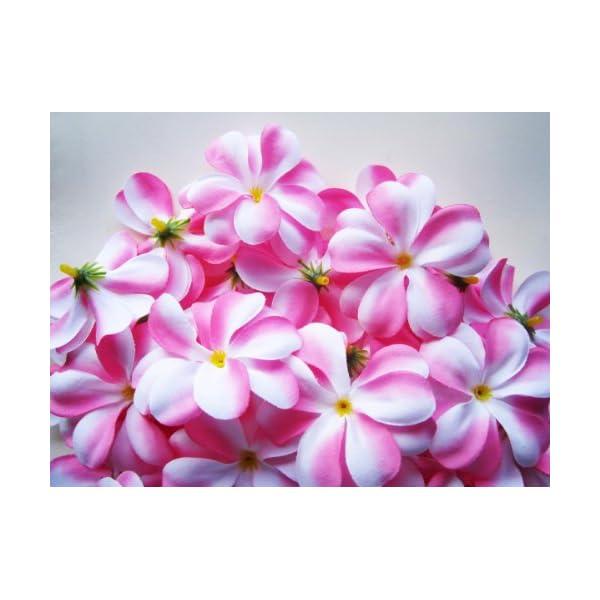 (100) Pink White Hawaiian Plumeria Frangipani Silk Flower Heads – 3″ – Artificial Flowers Head Fabric Floral Supplies Wholesale Lot for Wedding Flowers Accessories Make Bridal Hair Clips Headbands Dress