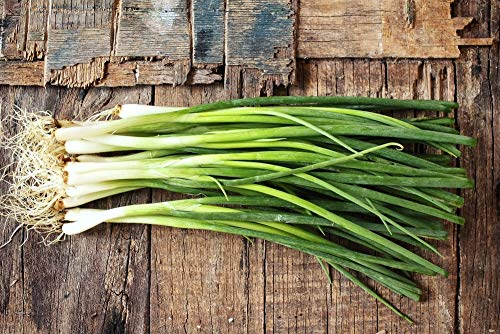 Green Bunching Onions Organic Seeds Scallions up to 2.500 Seeds