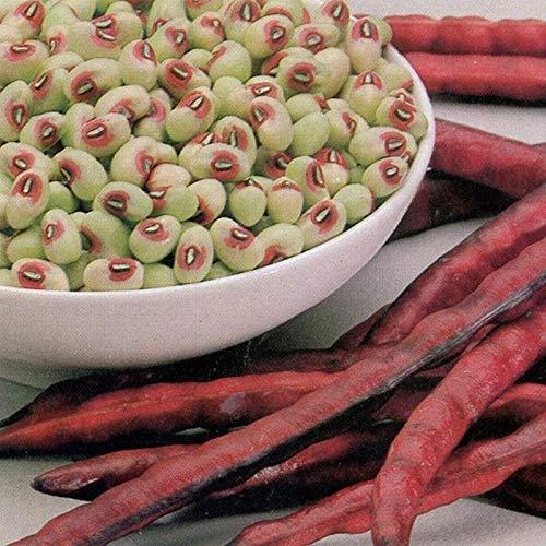 Knuckle Purplehull Cowpea Seeds (40 Seed Pack)