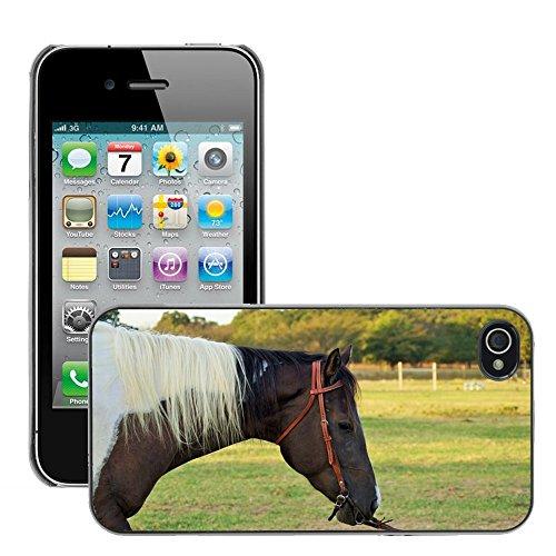 Bild Hart Handy Schwarz Schutz Case Cover Schale Etui // M00133271 Pferde Texas Reittier // Apple iPhone 4 4S 4G
