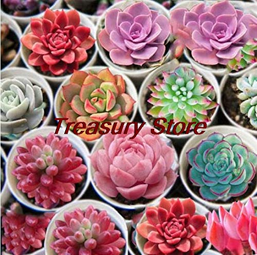 Kasuki 200 pcs/Bag Exotic Mini Succulent Cactus Rare Succulent Perennial Herb Plants Seed Pot Flower Indoor for Garden Flore Pot - (Color: A5)