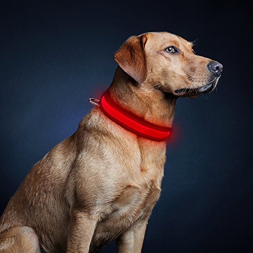 Love, love, love this collar!