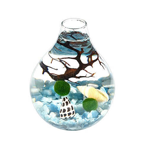Ecological System Aquatic Aquarium- 2 Lving Moss Balls Aquamarine Gravels Black Sea Fan and Seashells Working Desk Decor Unique Gift for Friends ()