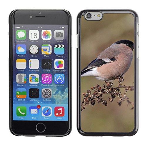 "Premio Sottile Slim Cassa Custodia Case Cover Shell // F00006880 oiseau // Apple iPhone 6 6S 6G PLUS 5.5"""