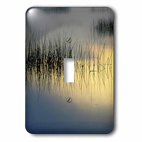 3dRose lsp_93032_1 New York, Adirondacks, Moose Lake, Reeds, Sunrise Us33 Bja0003 Jaynes Gallery Single Toggle Switch Contemplation Moose