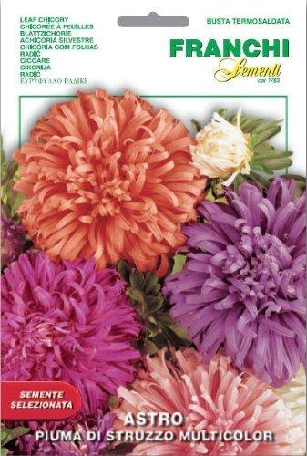 Franchi Samen Aster Piuma di Struzzo Seeds of Italy Ltd
