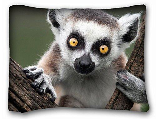 Decorative Standard Pillow Case Animals Lemur 12 x 20 Inches