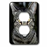 3dRose Danita Delimont - Cats - USA, California. Male tabby cat portrait. - Light Switch Covers - 2 plug outlet cover (lsp_278513_6)