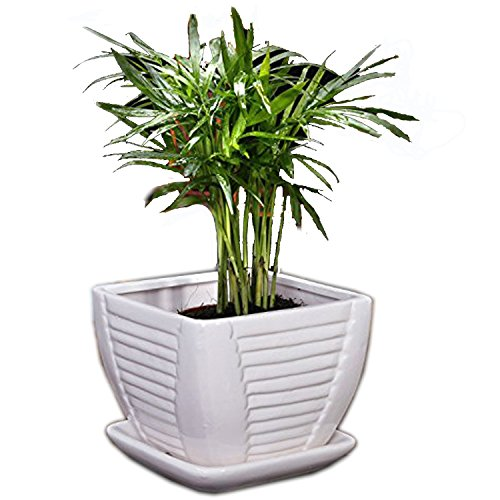 White Square Ceramic Flower Plant Pot with Attached Saucer with Drainage Holes