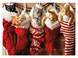 Avanti Press Christmas Cards, Stocking Full of Kittens, 10 Count (701154)