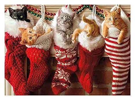 Kitten Christmas Cards.Avanti Press Christmas Cards Stocking Full Of Kittens 10 Count 701154