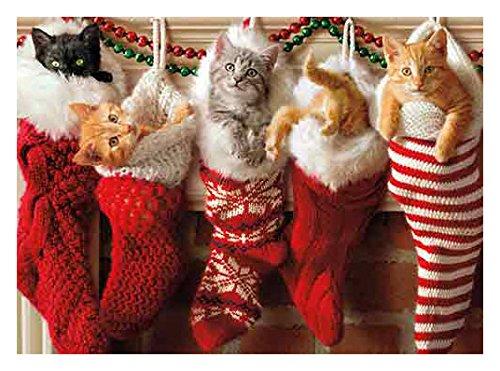 Christmas Kittens Stocking - Avanti Press Christmas Cards, Stocking Full of Kittens, 100 Count Value Pack (32577)