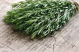 Certified Organic Rosemary Seed (200ct) 2018 Seed