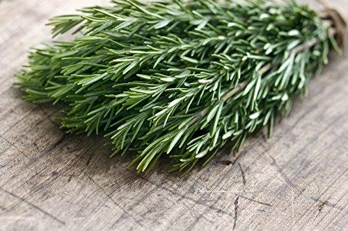 Certified Organic Rosemary Seed (200ct) 2018 Seed