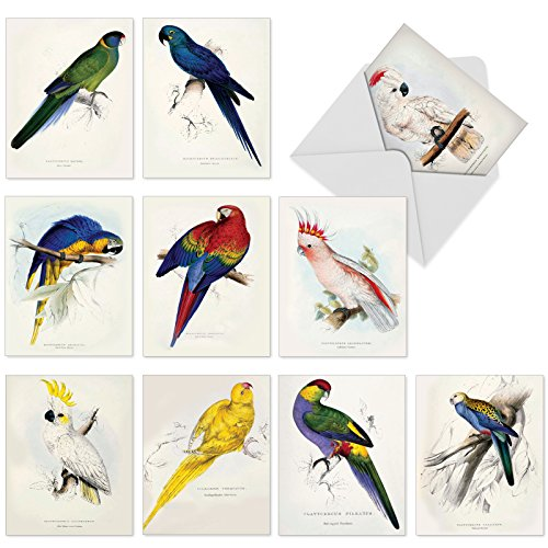 M6034sl Birds Of A Feather: 10 Assorted Blank All-Occasion Note Cards Feature Naturalist Illustrations of Colorful Birds, w/White Envelopes.