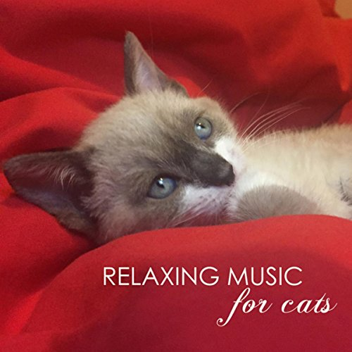relaxing-music-for-cats-soothing-classical-songs-and-ambient-nature-sounds-for-pet-therapy