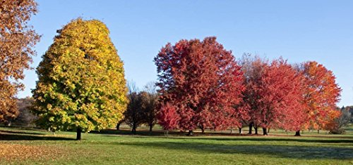 (5x10 matted to 11x14 Fall Trees, Arboretum, Madison, WI Photograph)