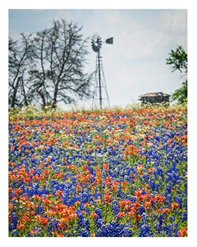 Texas Bluebonnets and Indian Paintbrush Wildflowers - 11x14 Unframed Photo Wall Art Print - Decor Gift for Texans or Anyone Who Loves Flowers - Home, Dorm or Bedroom Poster Decor - Present Under $20 ()