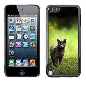 EJOY---Cubierta de la caja de protección la piel dura para el ** Apple iPod Touch 5 ** --Británico de Pelo Corto