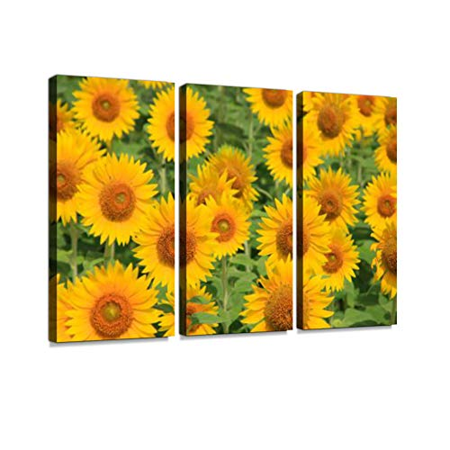 Sunflower Field Print On Canvas Wall Artwork Modern Photography Home Decor Unique Pattern Stretched and Framed 3 Piece